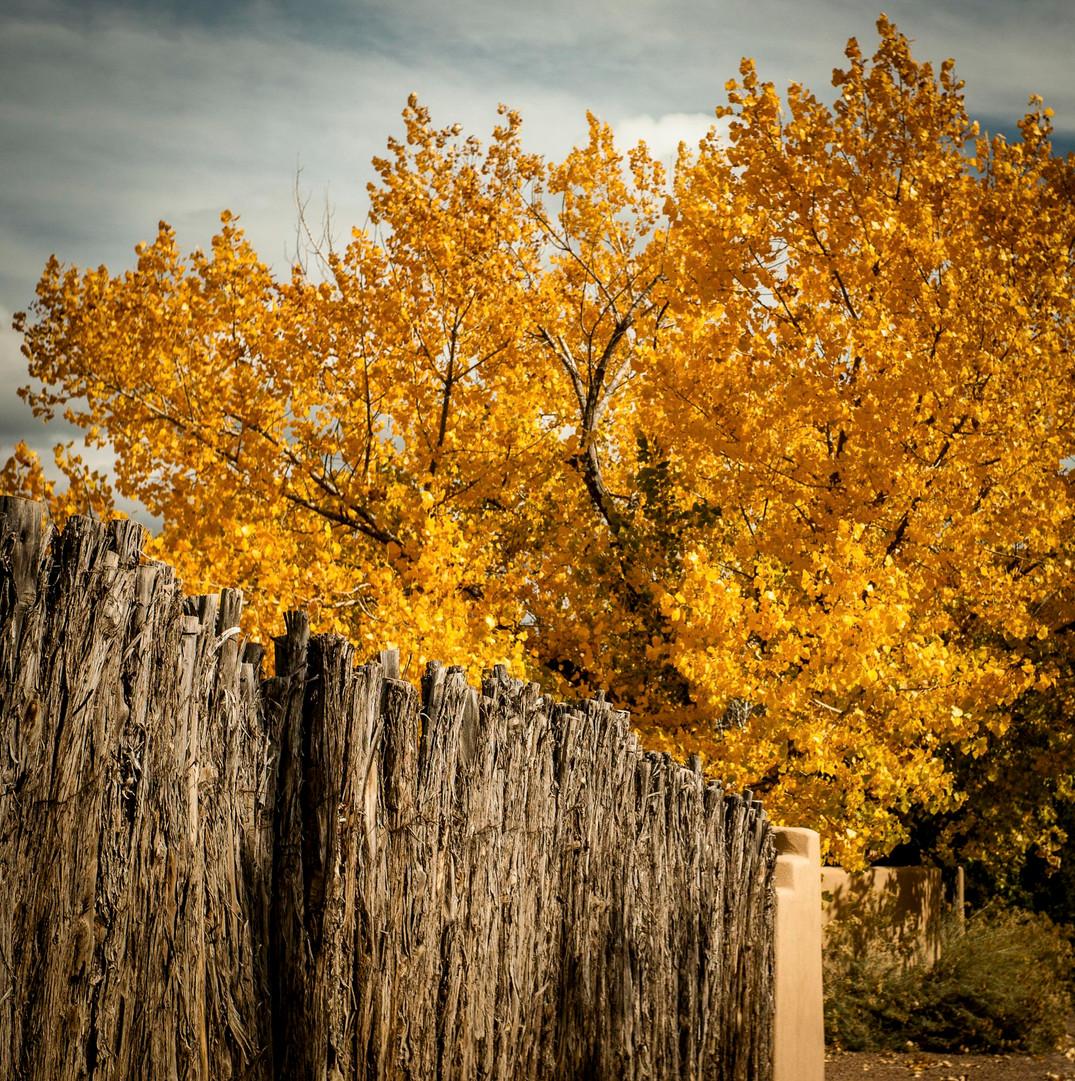 Siddho-Photography-Nature-C-19.jpg