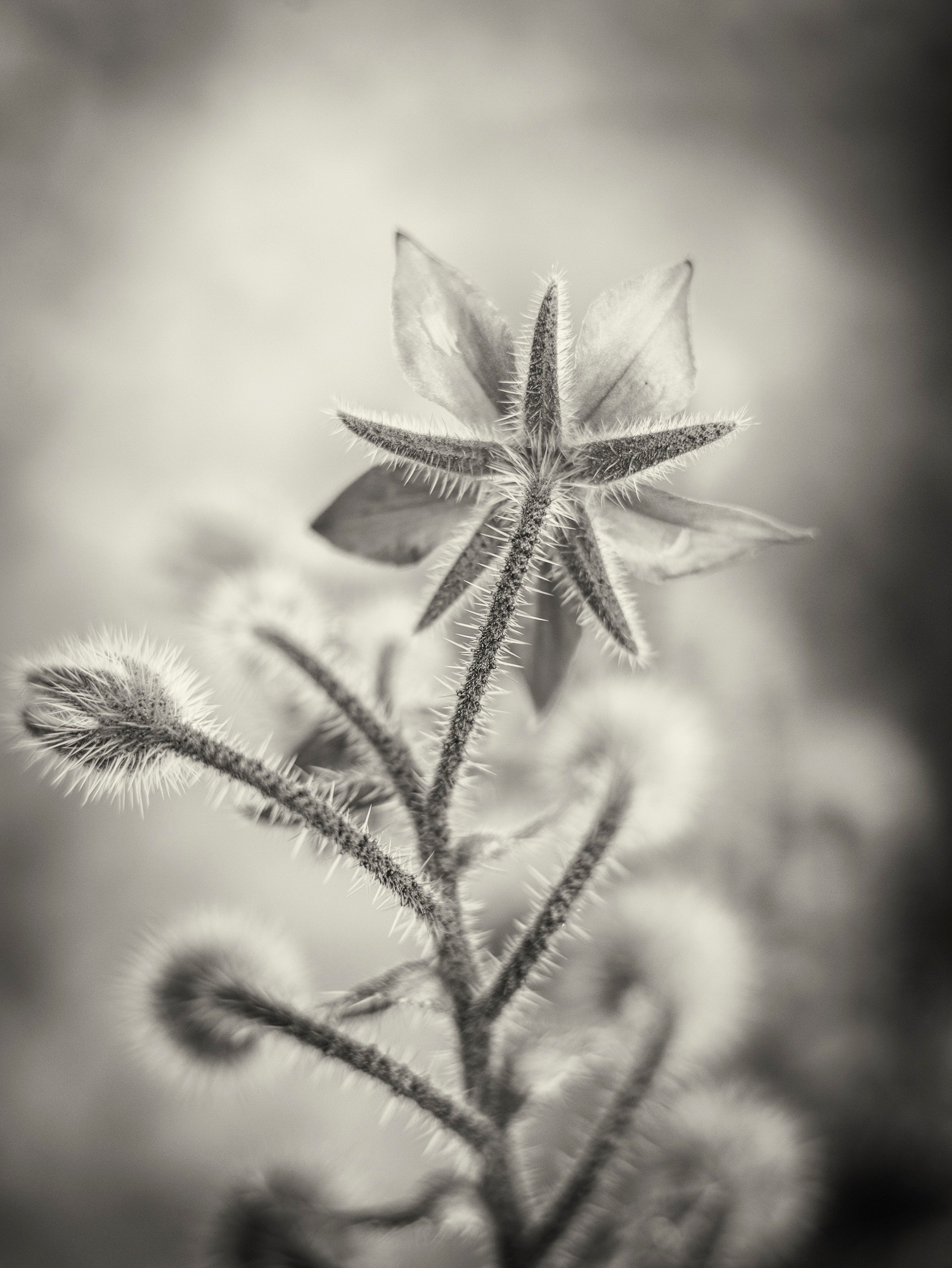Siddho-Photography-nature-BW-1.jpg