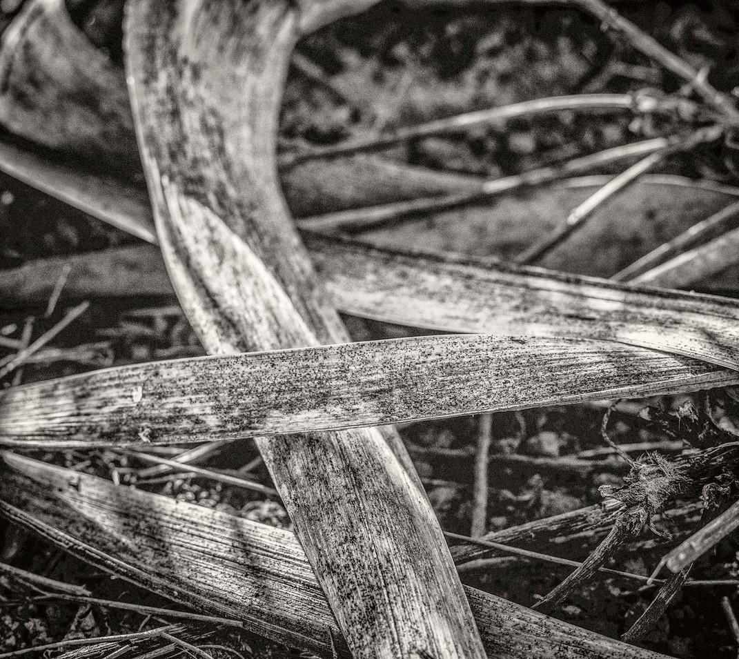 Siddho-Photography-nature-BW-10.jpg