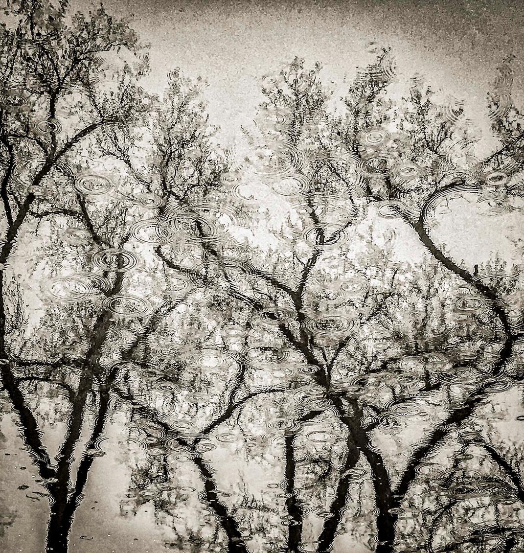 Siddho-Photography-nature-BW-27.jpg