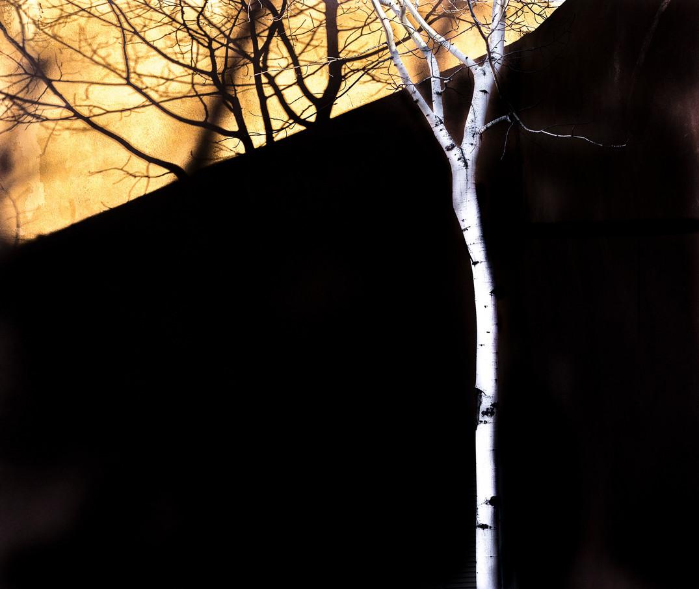 Siddho-Photography-Nature-C-2.jpg