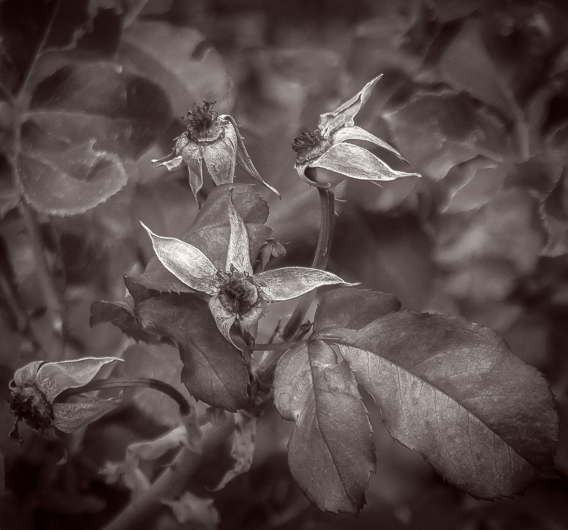 Siddho-Photography-nature-BW-30.jpg