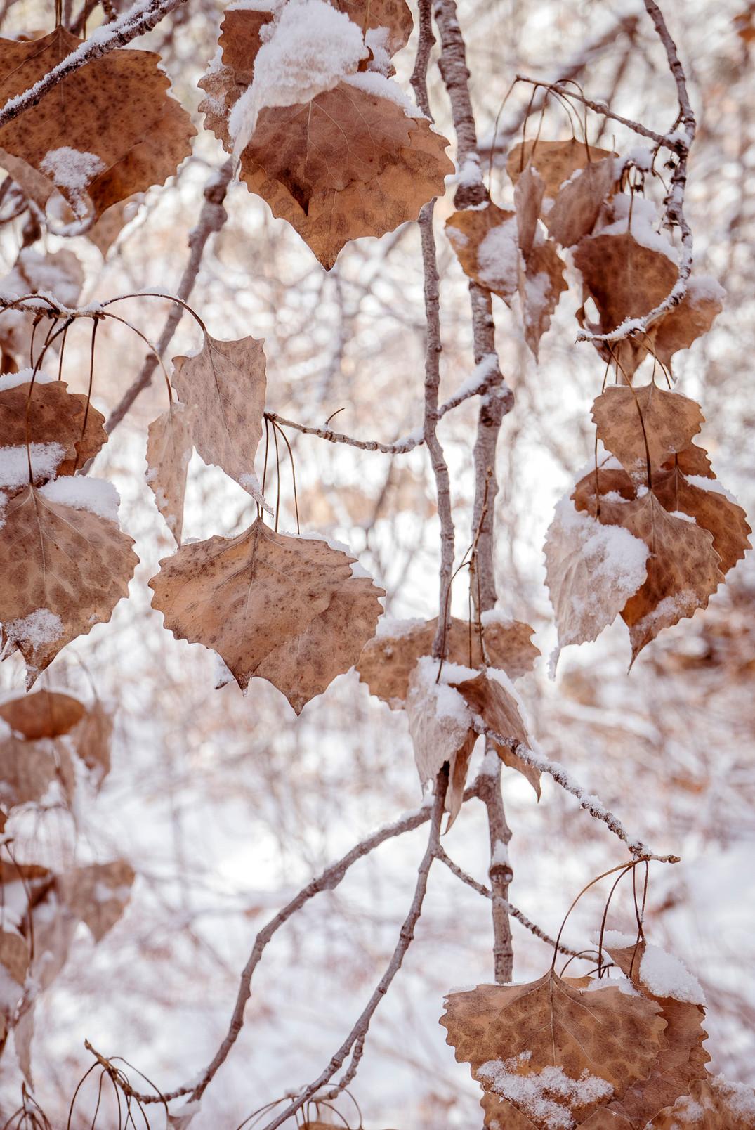 Siddho-Photography-Nature-C-1.jpg