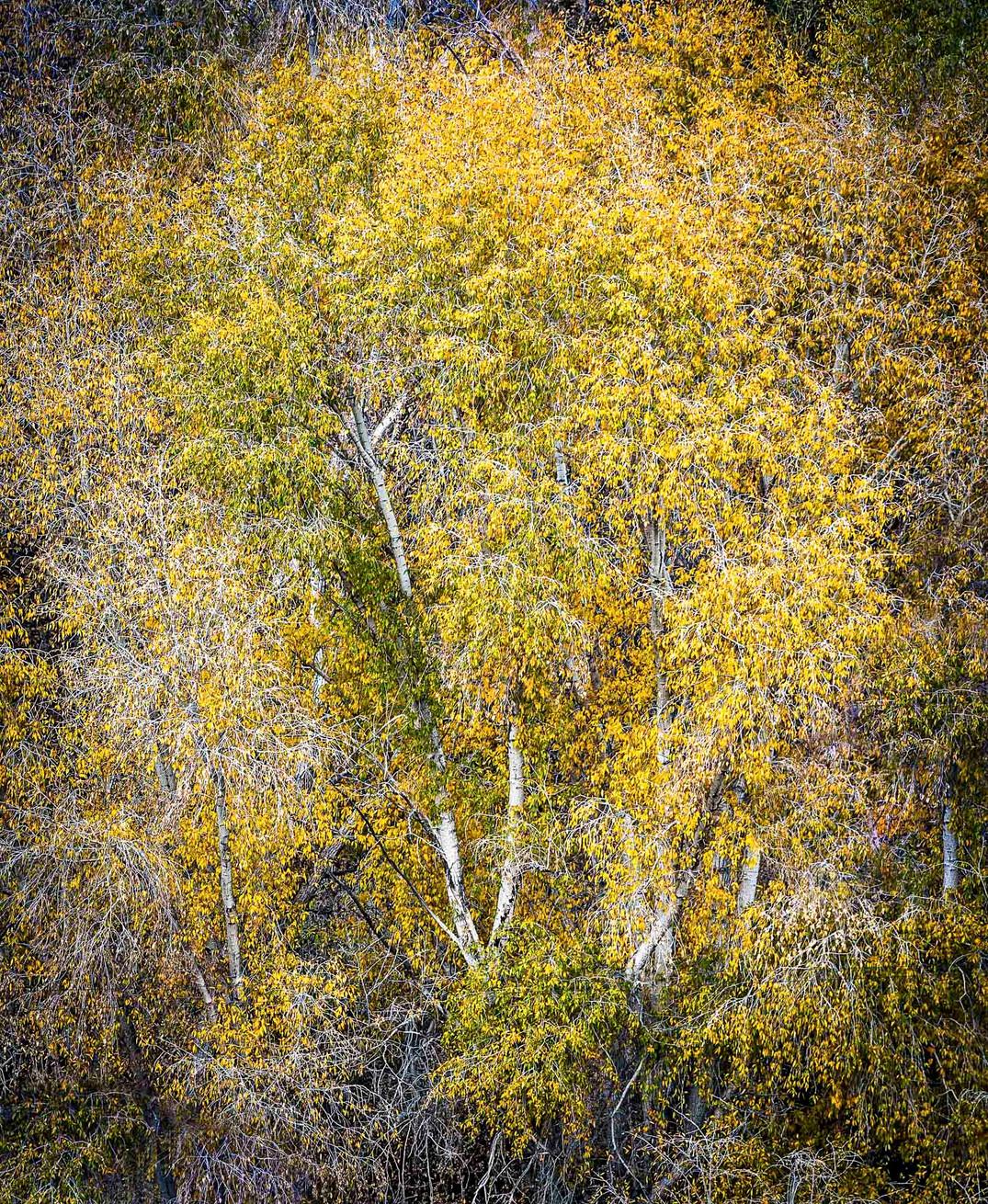 Siddho-Photography-Nature-C-7.jpg