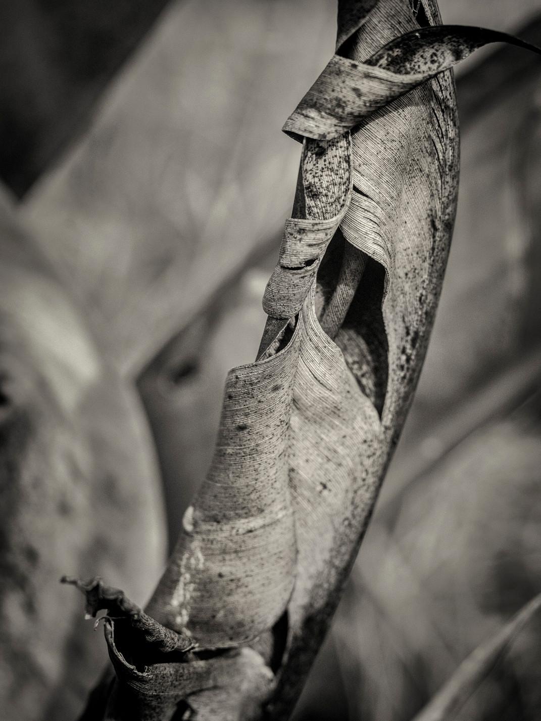 Siddho-Photography-nature-BW-14.jpg