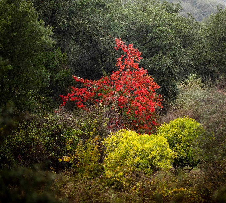 Siddho-Photography-Nature-C-9.jpg