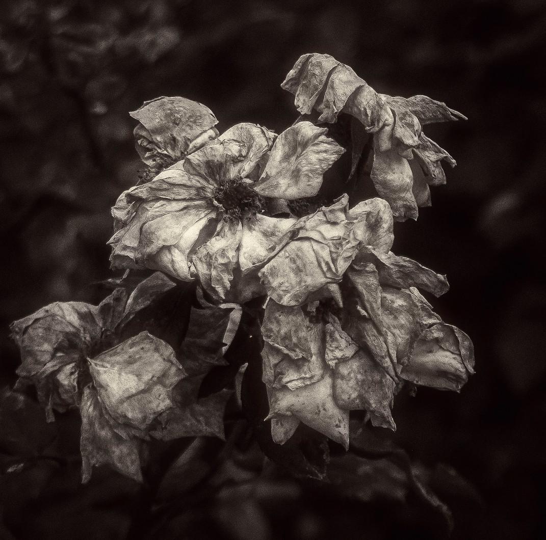Siddho-Photography-nature-BW-20.jpg