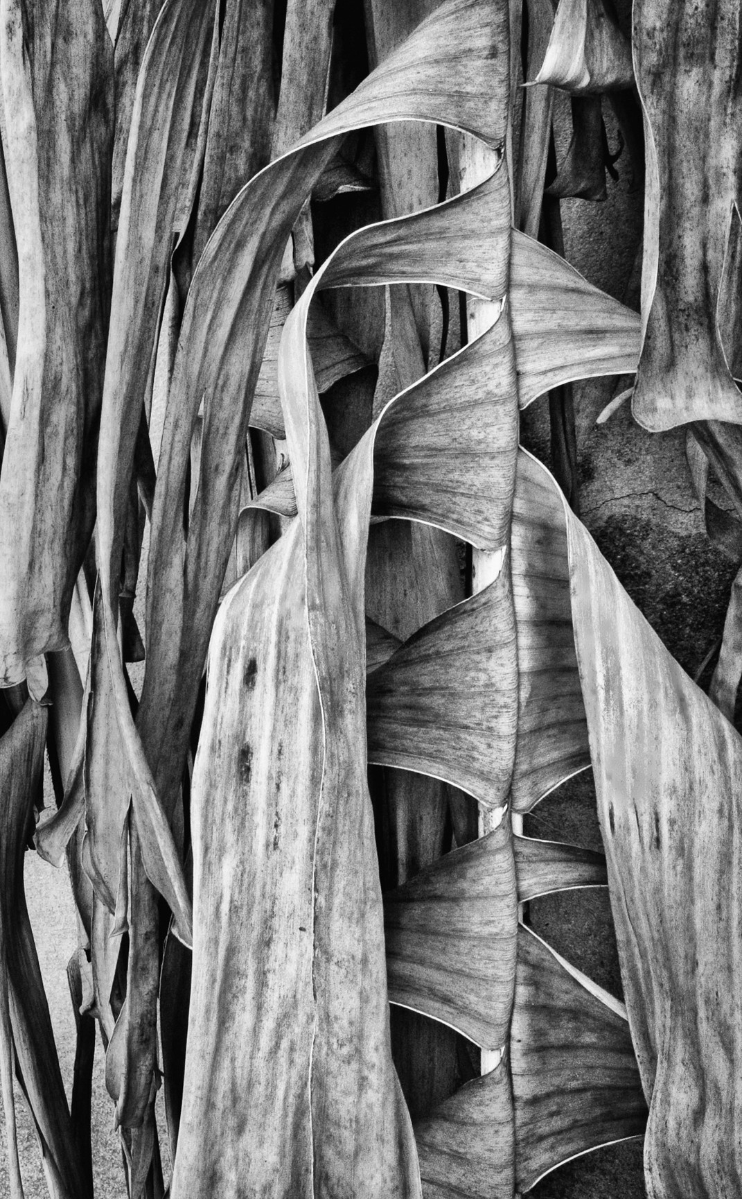 Siddho-Photography-nature-BW-8.jpg