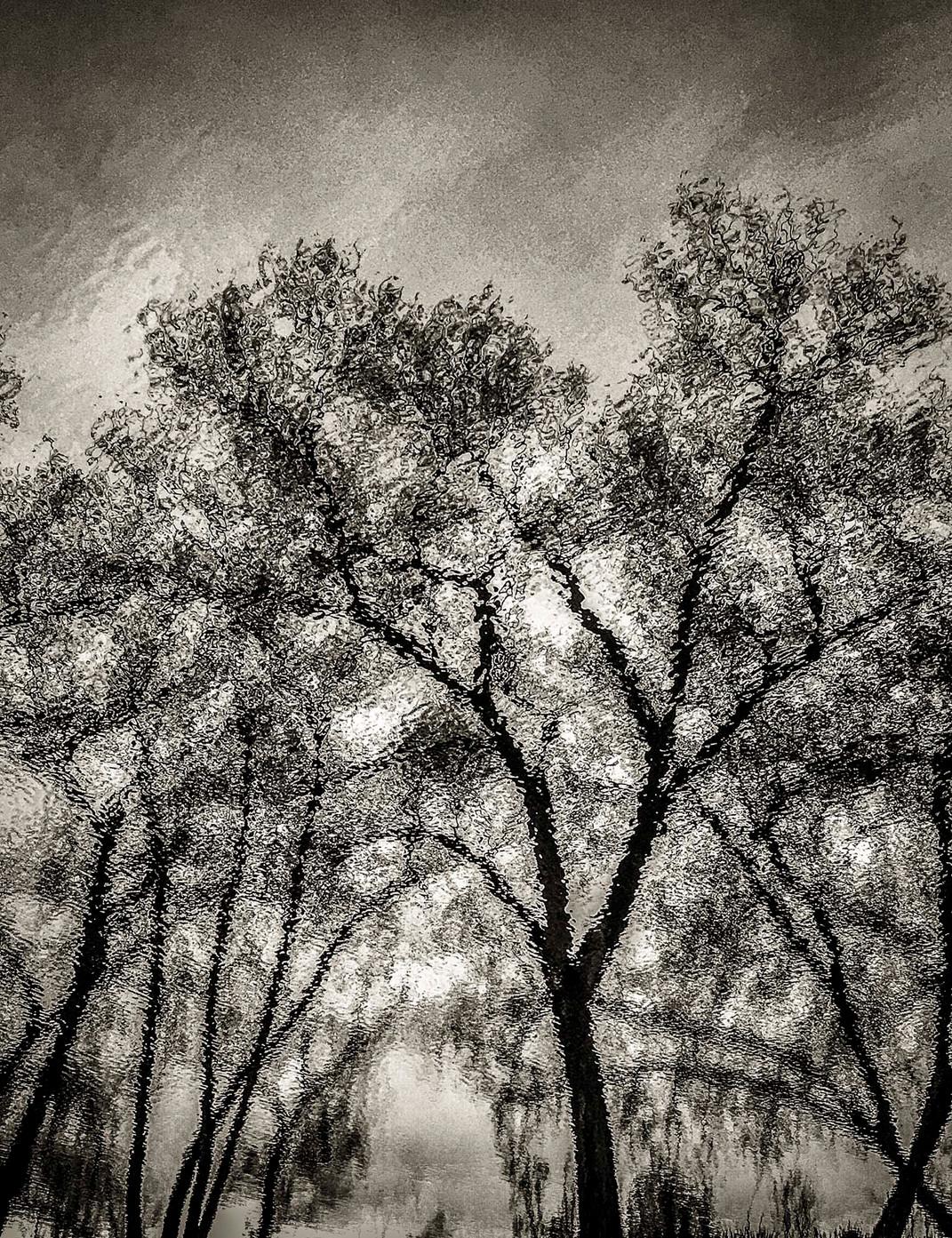 Siddho-Photography-nature-BW-32.jpg