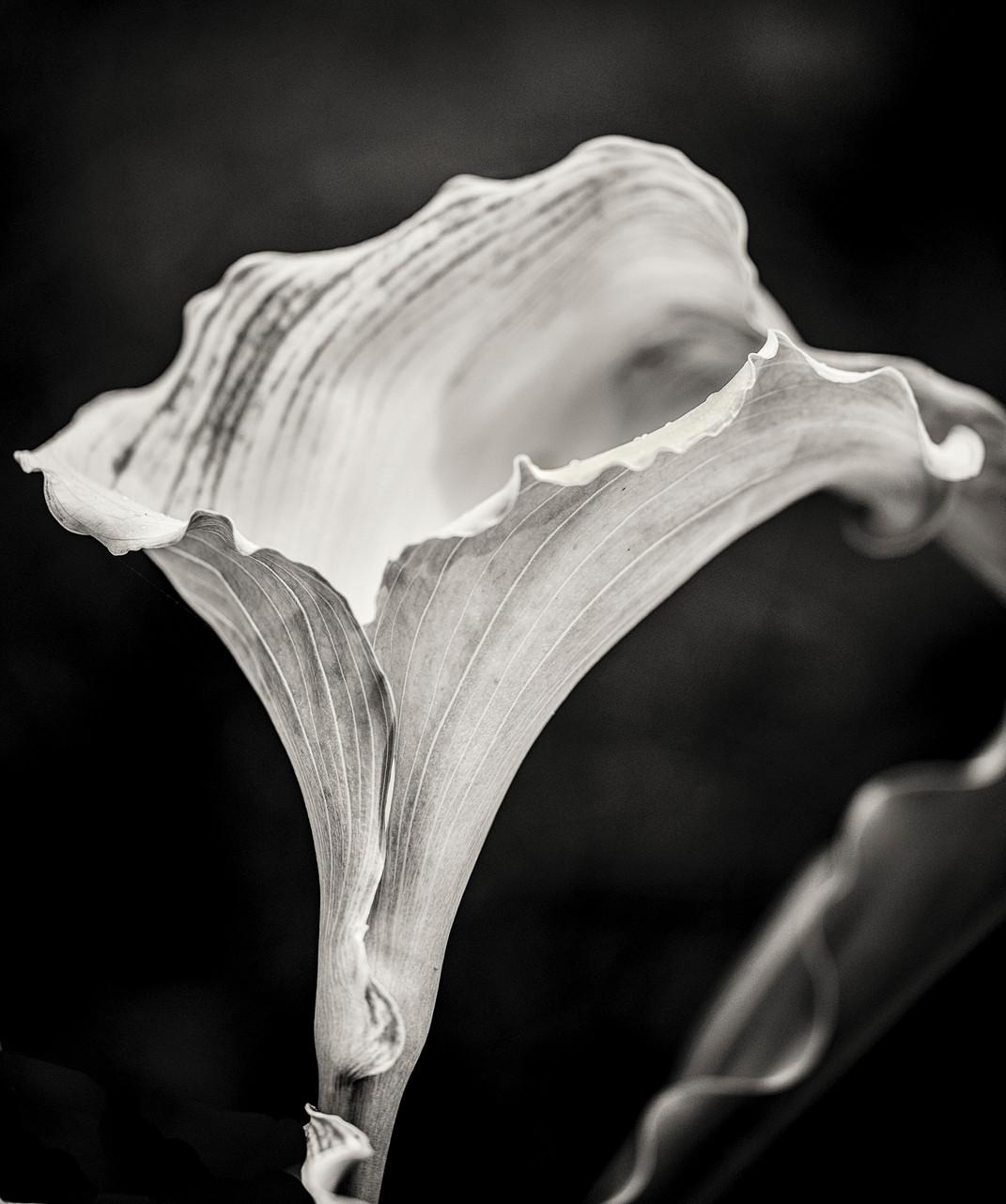 Siddho-Photography-nature-BW-23.jpg