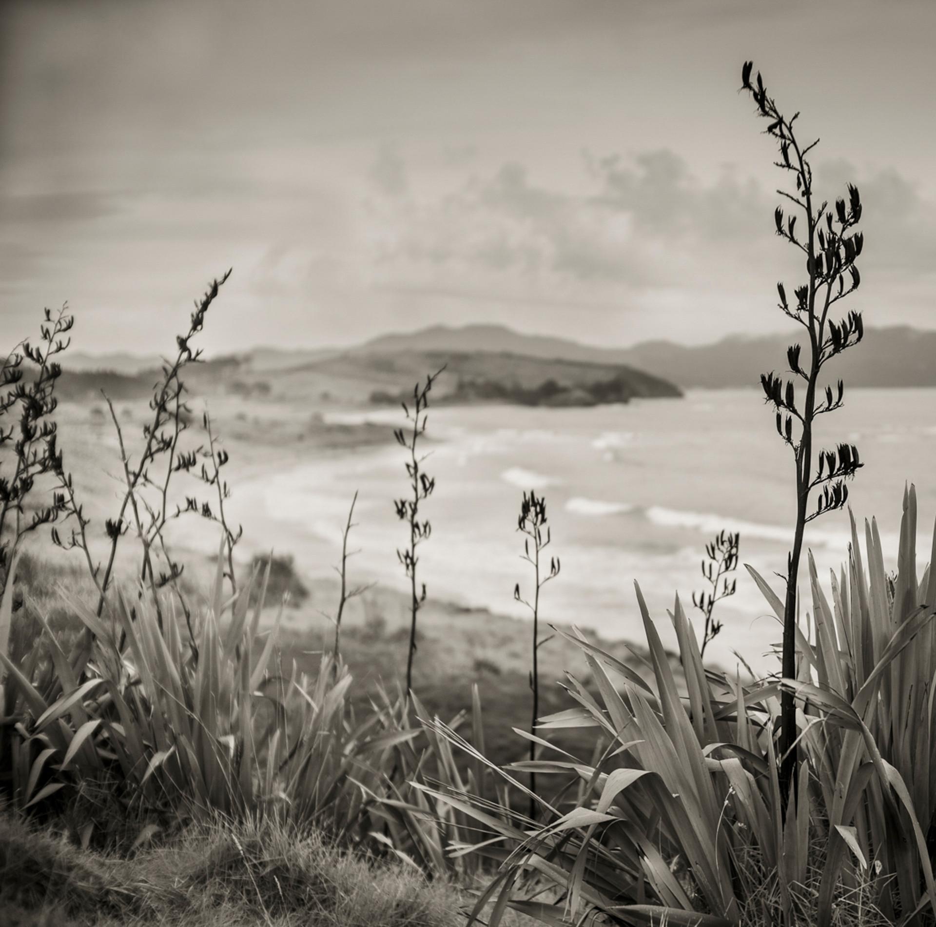 Siddho-Photography-LS-BW-13.jpg