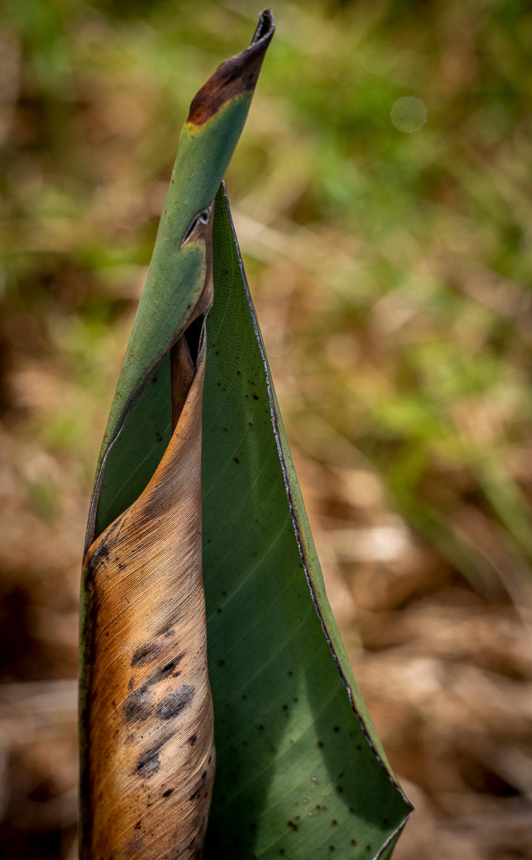 Siddho-Photography-Nature-C-12.jpg