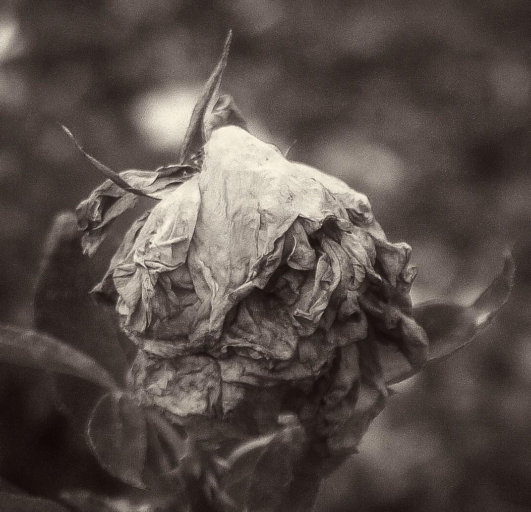 Siddho-Photography-nature-BW-21.jpg