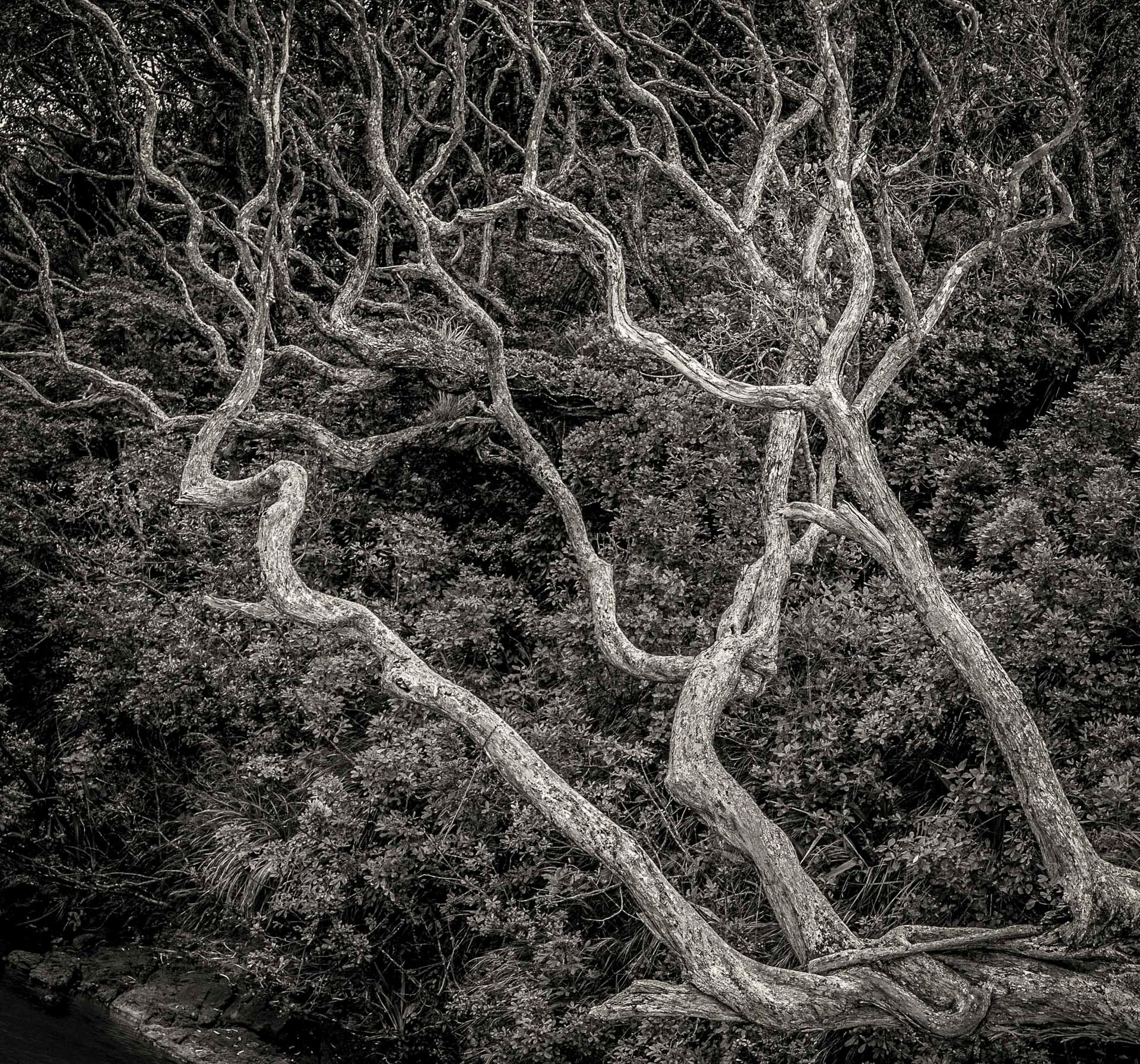 Siddho-Photography-nature-BW-13.jpg
