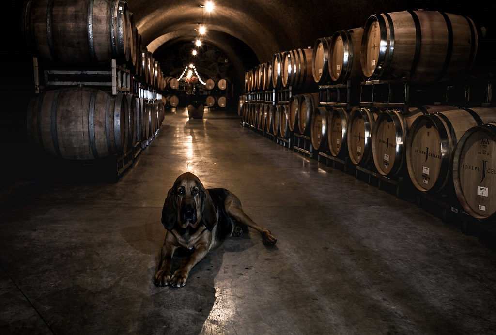Body the dog in the cellar
