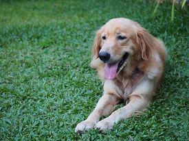 Top Hat & Tails Pet Grooming – Dog Groomer in Cambridge