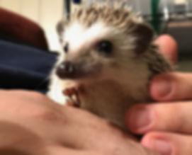 Prickle Pack Hedgehogs Illinois Dru