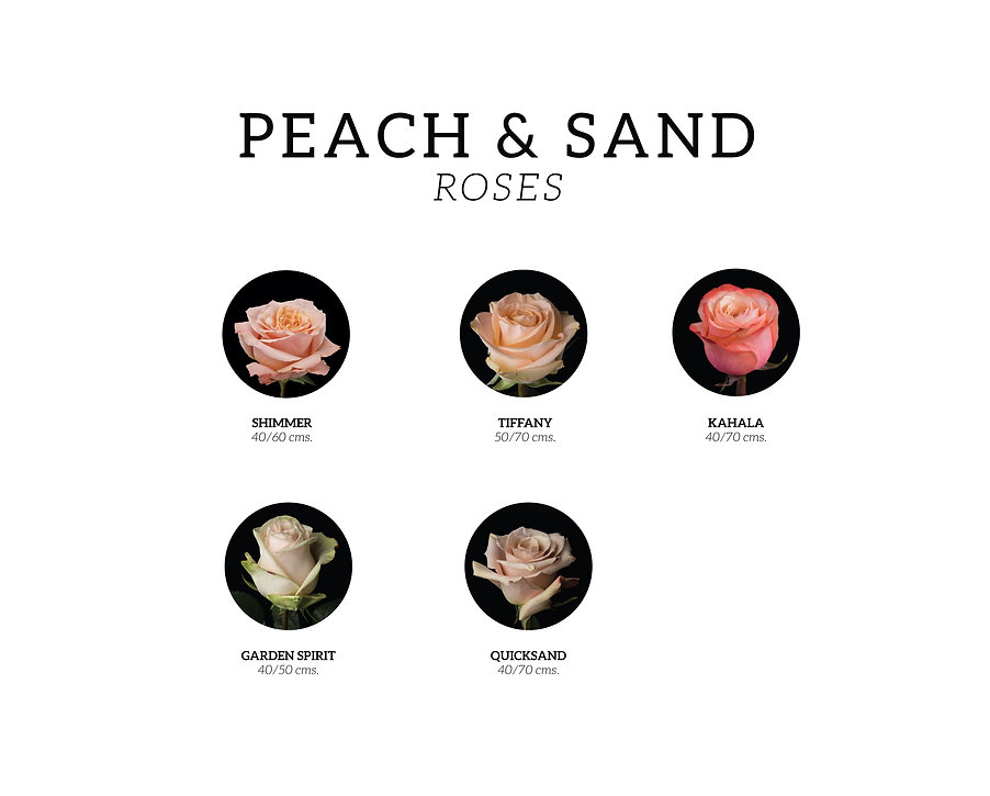 PEACH-AND-SAND-ROSES.jpg