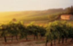 Cognac 8 Frankrijk wijn vin poitou chare