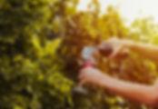 Gramado-turismo-jolimont-vinicola-01.jpg