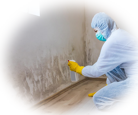 mold-remediation-services-1024x819.png