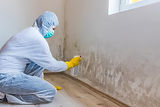 woman-removes-mold-wall-using-spray-bott