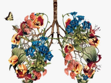 Lungs! The connection between the external & internal.
