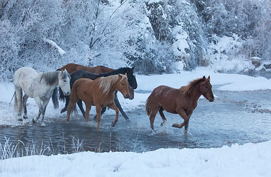 Horse drive in winter on Hideout Ranch,