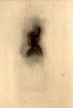 2002-Burnt-Fig