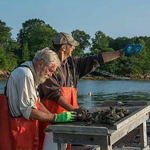Maine Oyster Farms - Casco Bay