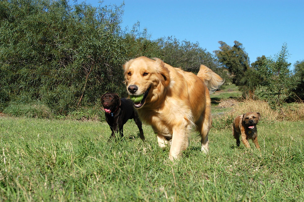 The Dog Walker 102.jpg