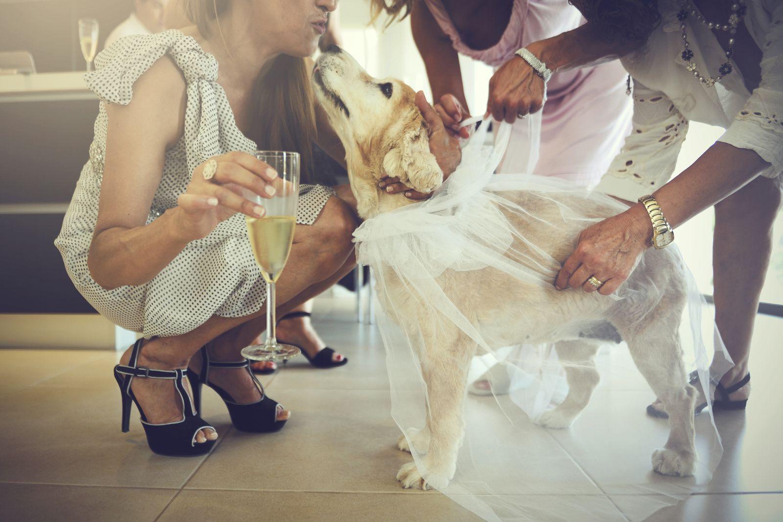 fotografo bodas mallorca 052.jpg