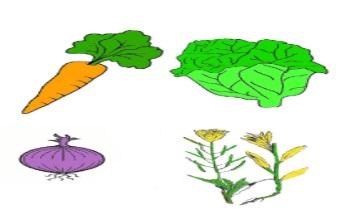 Morena Torrico. Verduras