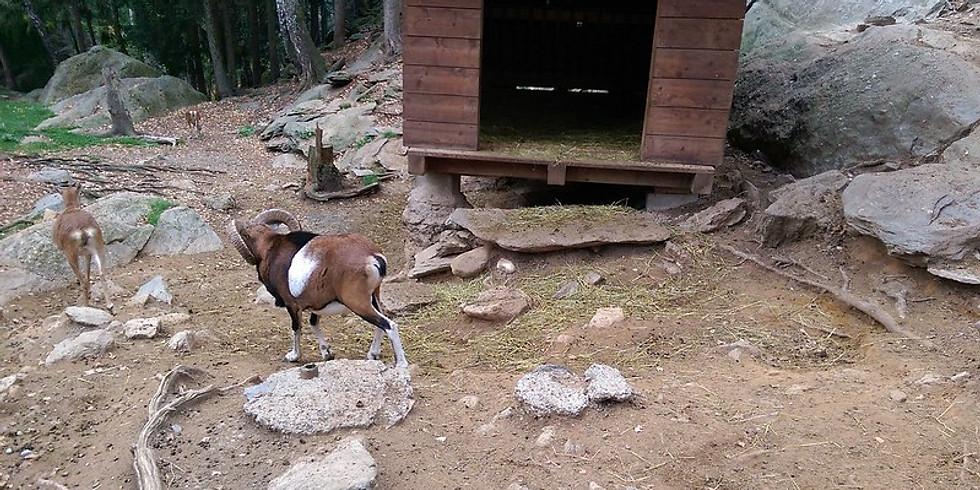 Sortie pour tous Zoo et Piscines des Marécottes (Suisse)