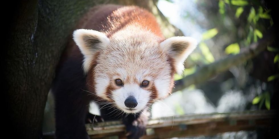 Séjour Familles au Touroparc Zoo (71)