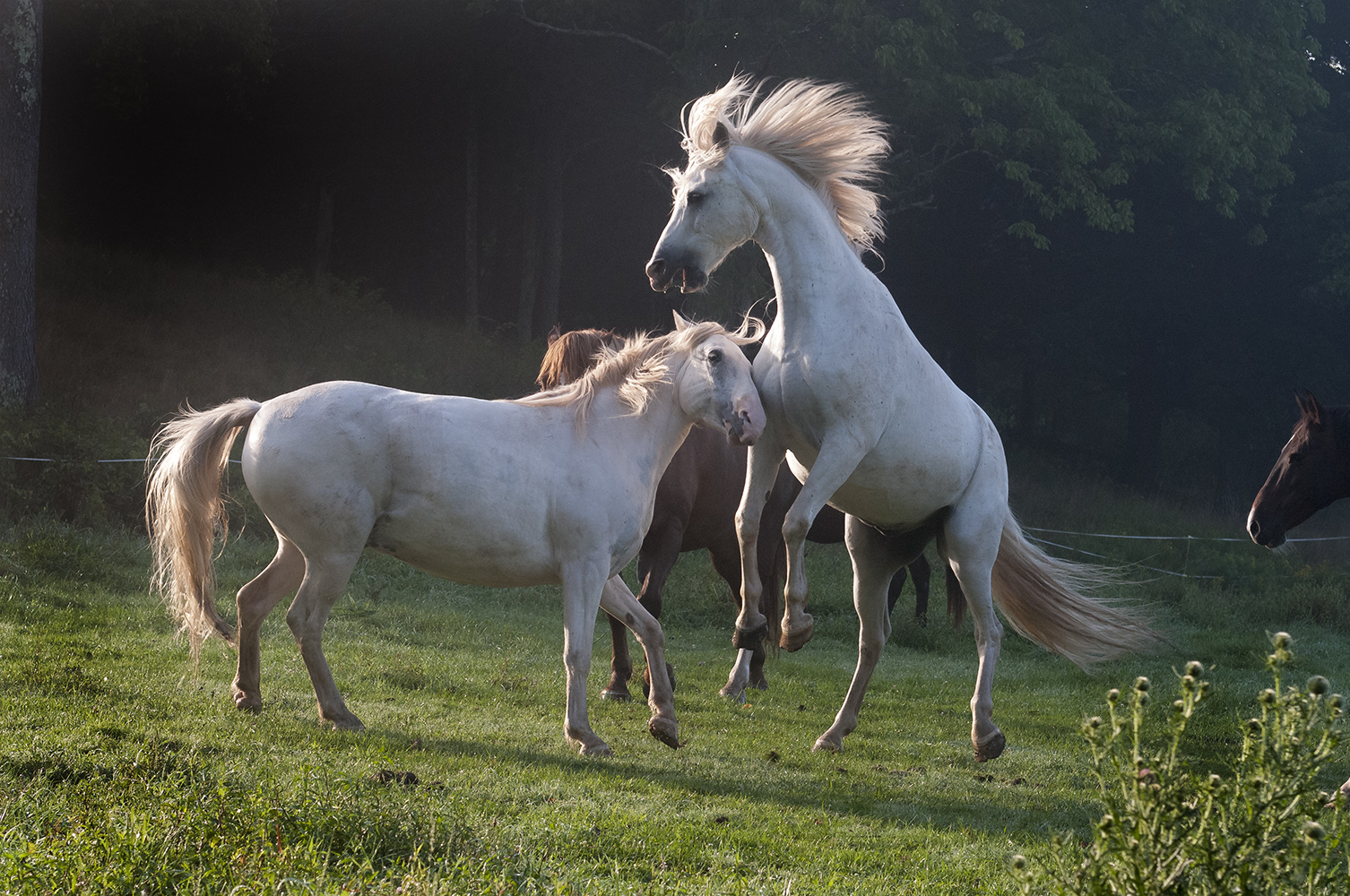 Horse Play in the Catskils