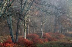 autumn woods in the Catskills