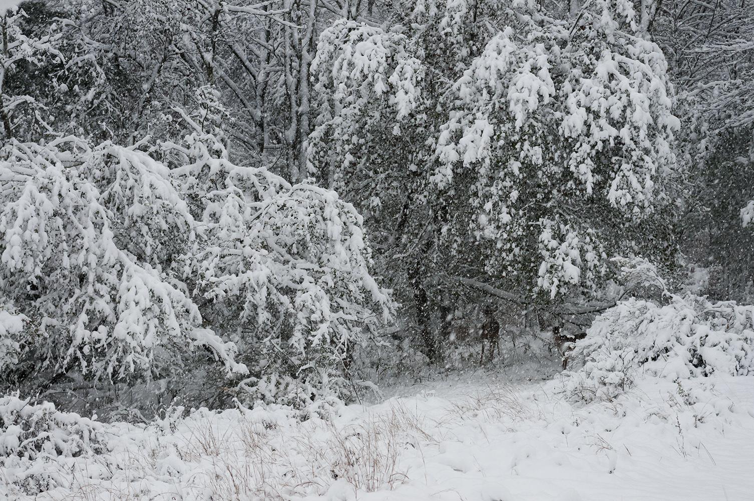 Catskills Winter