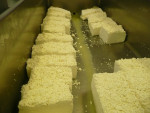 Cutting the curd in to blocks