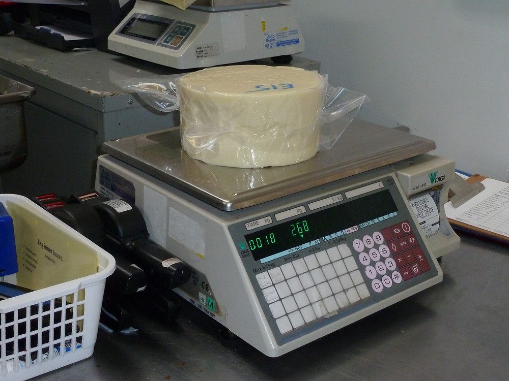 Weighing each cheese so we can calculate the yield