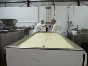 Andrew and Stu pushing back the curd