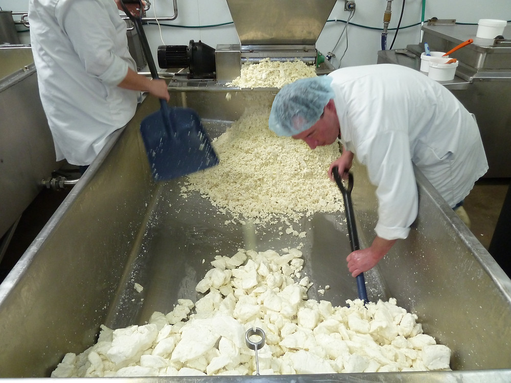 Milling the big vat of sheep, small vat to follow
