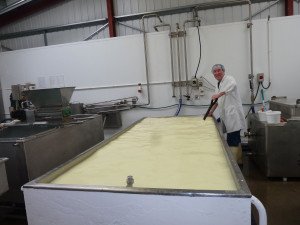 Stu stirring a large vat of goat milk