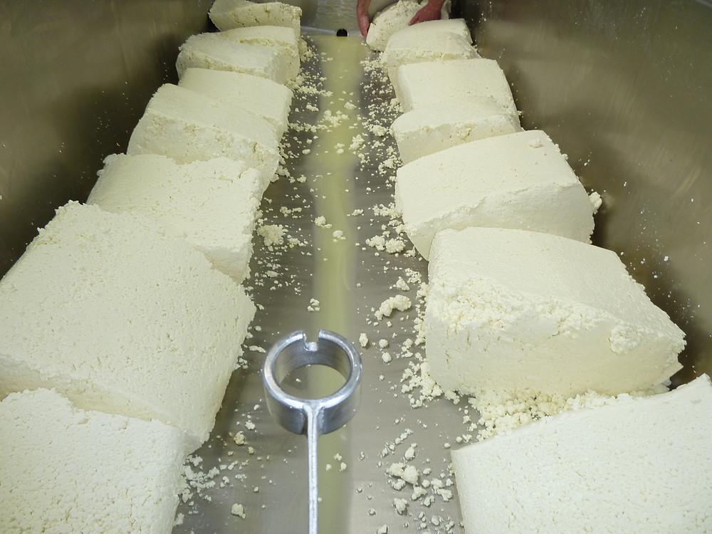 Gargantuan blocks of sheep curd on our penultimate make