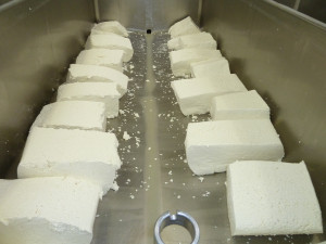 Blocks of curd before we cubed, salted and milled