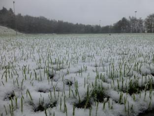 +++ BREAKING-NEWS +++ Spielabsagen aufgrund des Winter-Wetters!