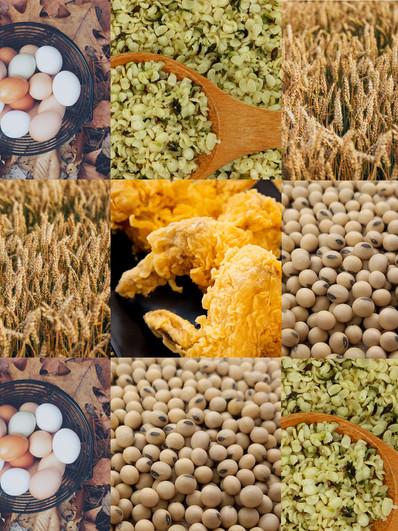 The Ultimate Protein Comparison