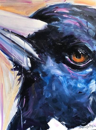 A Very Close Magpie