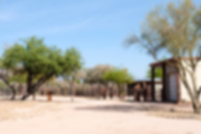 Horse property ranches in Tucson / Marana