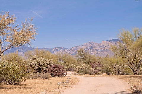 Ranch under the Tucson Mountains